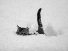 chat neige.jpg