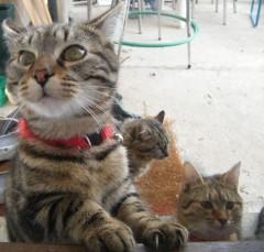 chats trouvés mangent.jpg