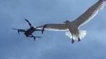 goelands drone.jpg