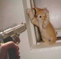 chat et pistolet.jpg