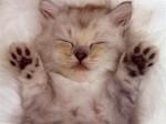 chaton-repos.jpg