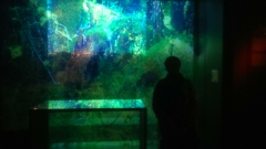 musée branly.JPG