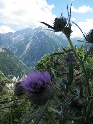 montagne et fleurs.jpg