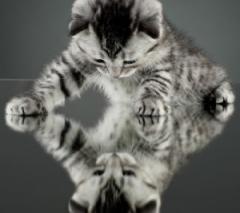 chat-miroir.jpg