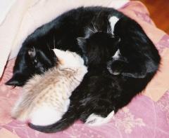 chat,chatons mignons,comment avoir des lecteurs sur son blog