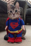 chat superman.png