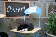 chat qui dort.jpg