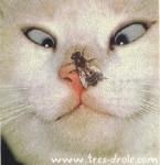chat-louche-.jpg