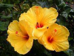 fleur du jardin.jpg