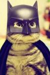chat super pouvoir batman.png
