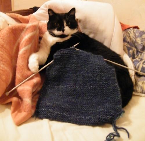 tricot,chat,mon chat sait tricoter