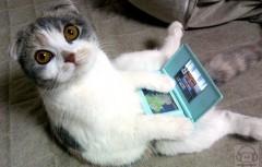 jeux vidéo.jpg