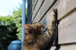 chat territoire.jpg