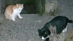 chats dehors.jpg